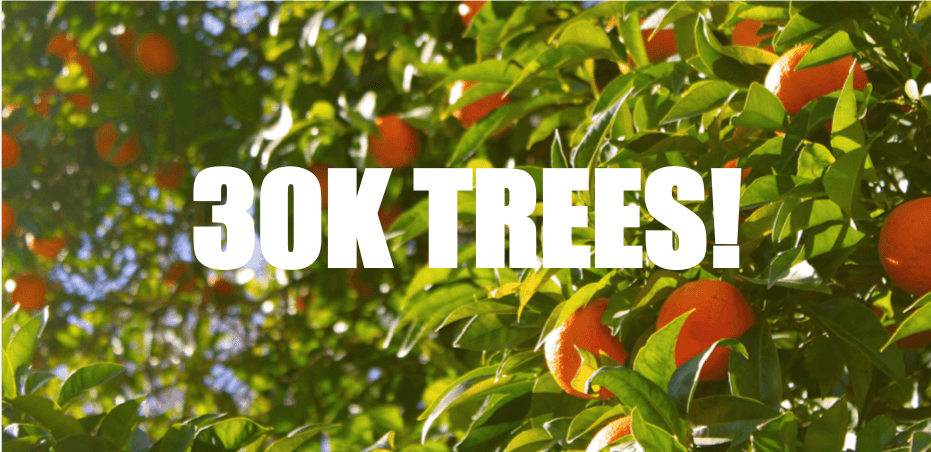 LoopUp 30K Trees